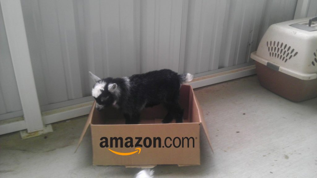 Trial Amazon Prime Pantry Goat Shipment