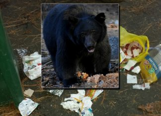 Evidence of Black Bear Jeb's handiwork in shaming local Banner Mount Residents