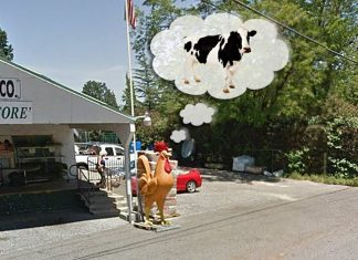 The Famous Ridge Feed And Supply chicken is seeking to be a cow