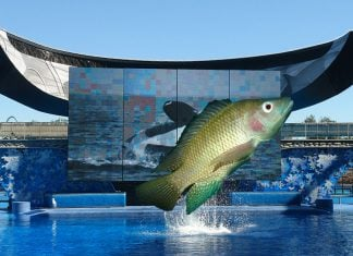 SeaWorld to Replace Orcas with Sustainable Tilapia Habitat