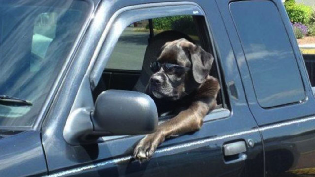 Dog in a Hot Summer Car? Here's What to Do.