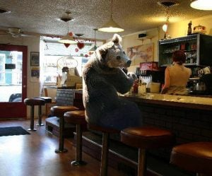 "Banner Mountain bear ""Jeb"" seen here waiting for his 24 orders of crepes at Nevada City's Classic Cafe. Source: the uncanny imagination of David C Jensen."