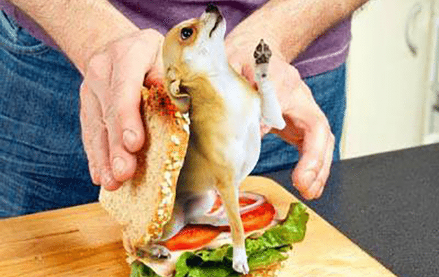 Area hardware store employee Rick Guzman found a live Chihuahua in his sandwich.