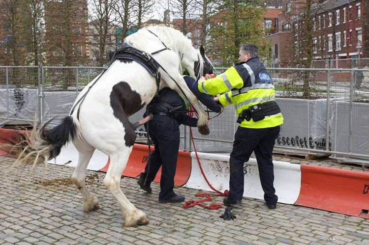 Chester the horse mounts Officer Eldon Paddington while Officer Neil Goodall stands by helplessly.