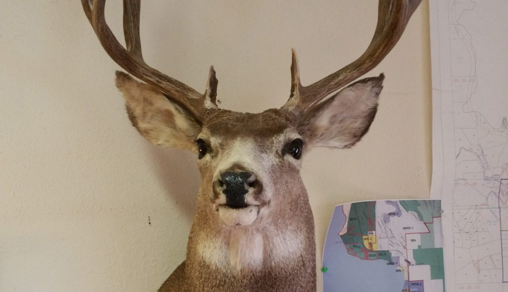 The deer who lost the staring contest located notary Gerald Duluth's office in Columbia Falls, MT.