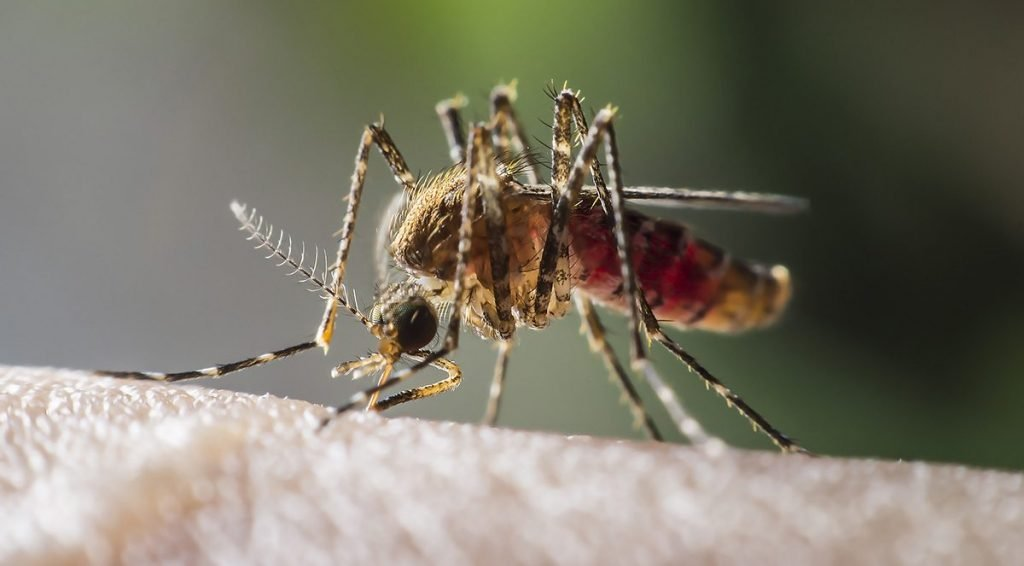 The 16 year, 230 million dollar study has determined that people do not like mosquitoes.