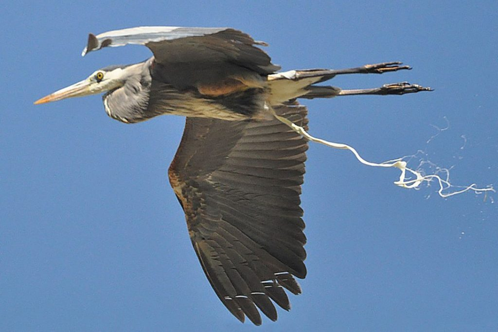 """Artist's depiction of one of the DoD's """"Chemtrail Birds."""""""
