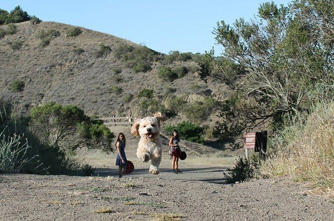Muffles, the world's largest dog made another rare appearance in a Reno, NV area regional park. Seen here with her owners Rochelle and Carla Smithson of Truckee, CA.