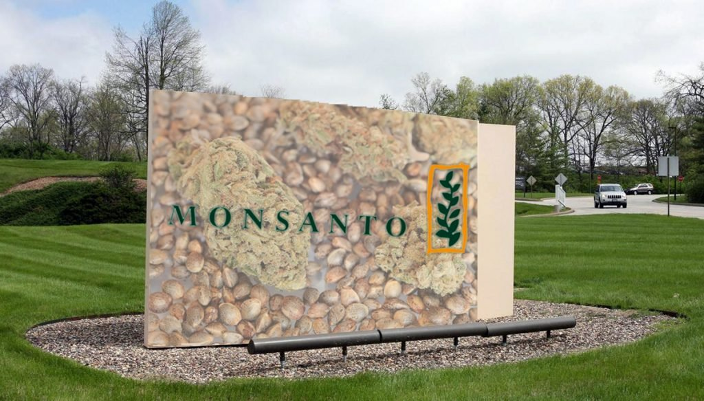 Monsanto plans to produce GMO cannabis seeds.