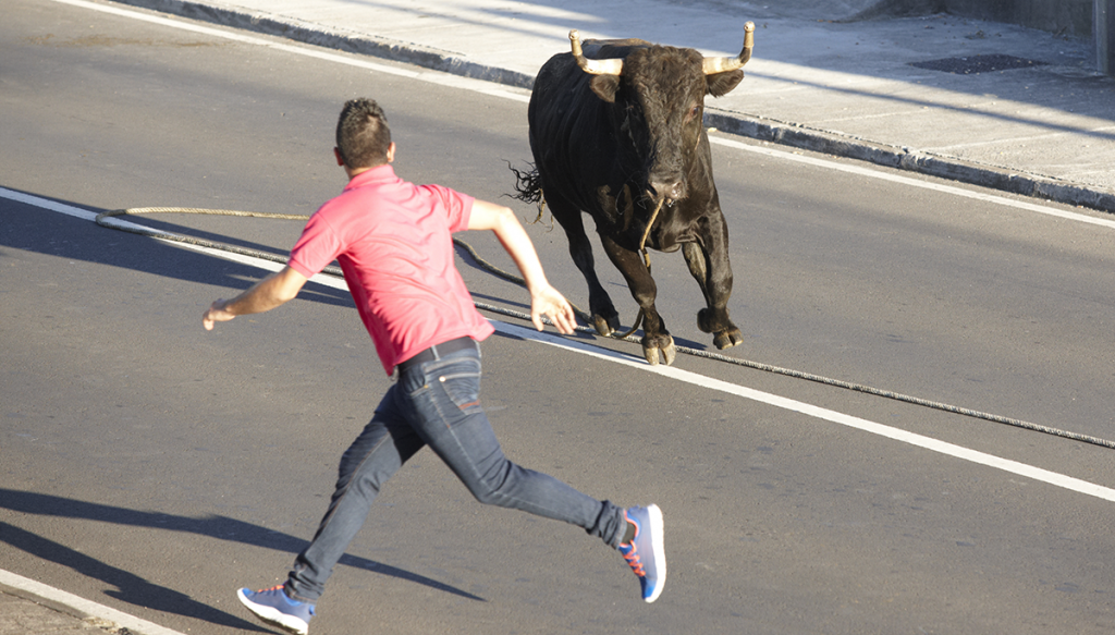 "Pete Johnson of Cedar Ridge attempting to capture his pet Bull ""Jim"" on Mill Street in Grass Valley. Picture courtesy of Janet Williams of Cedar Ridge."