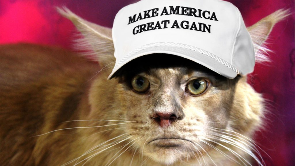 """I've buried stuff in my litter box that smelled better and was smarter than Donald Trump."" -- Mr. Whisker Bottoms"
