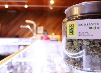 The Monsanto Corporation claims it has patented a cancer-curing strain of medical marijuana.