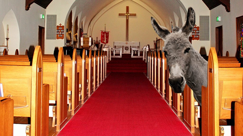 an illegal mexican burro fearing Donald Trump has sought asylum in a Los Angels Catholic Church.