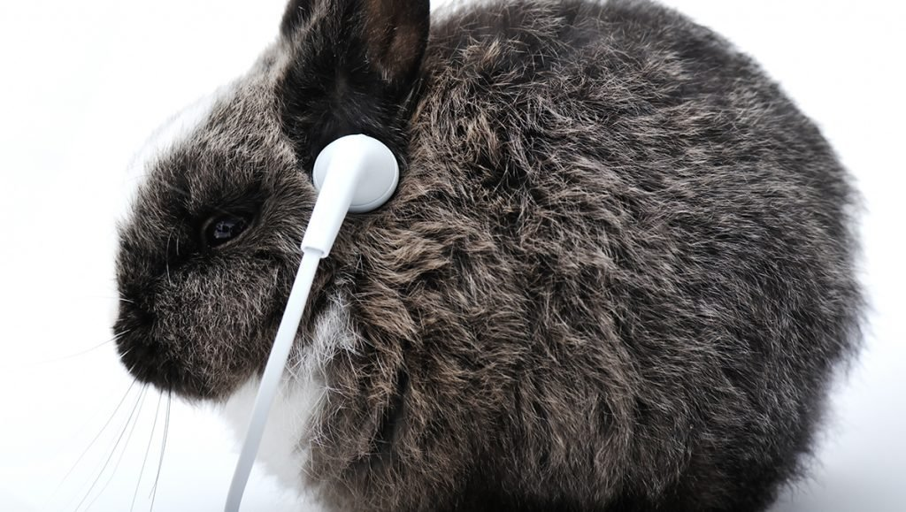 "Area Rabbit ""Vampire"" says she can't stand the 1980s New Wave band Duran Duran."