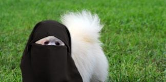 A local female Pomeranian named Dazzler recently converted to Islam.