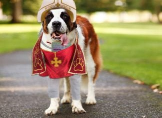 Saint Bailey Bernard of Holy Southern Shepherd Church released a statement regarding the controversial 'Morning After' dog biscuit