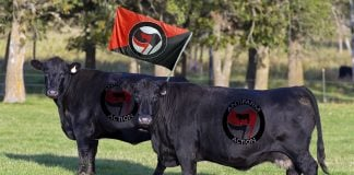 """A loose coalition of Nebraska Angus cattle have formed am """"AntiFarm"""" movement in hopes of challenging area Ranchers."""