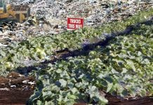 Millions of tons of waste cantaloupe seeds are making their way into our landfills and sprouting.