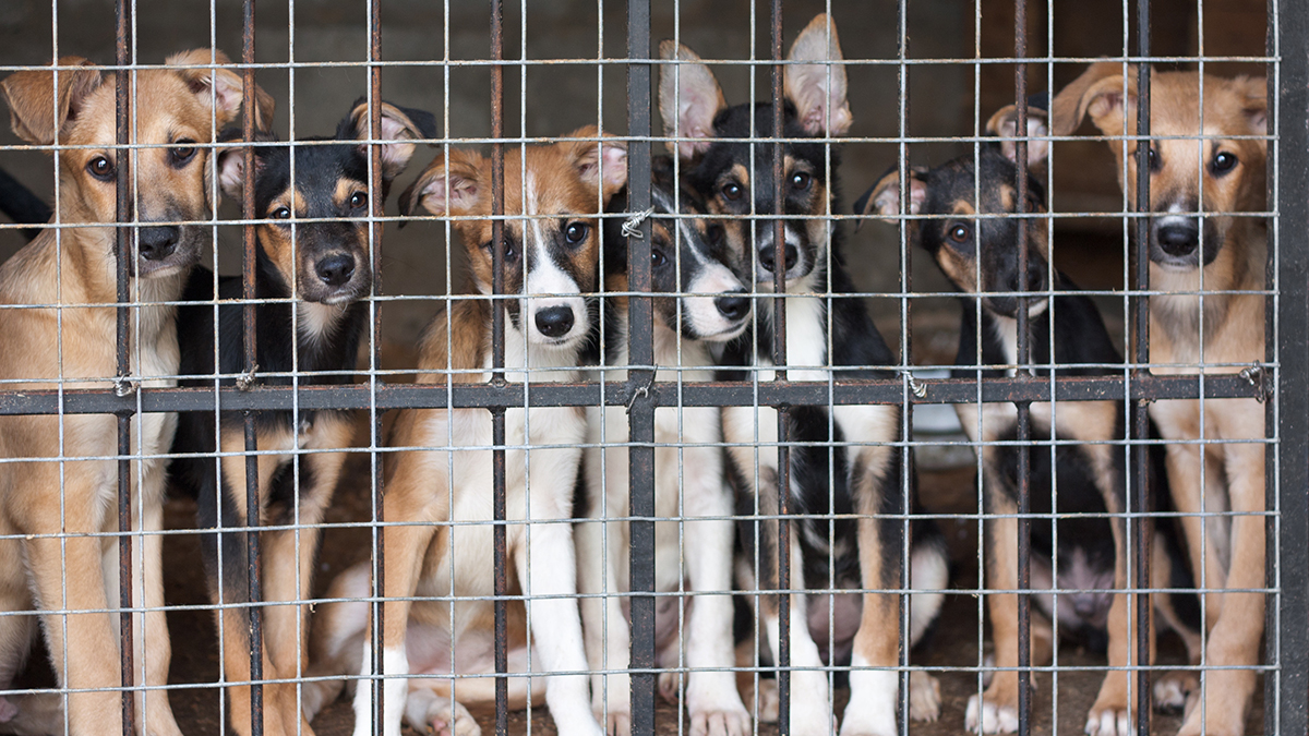 As many as 1000 puppies have been separated from their mothers at the US/Mexican border.