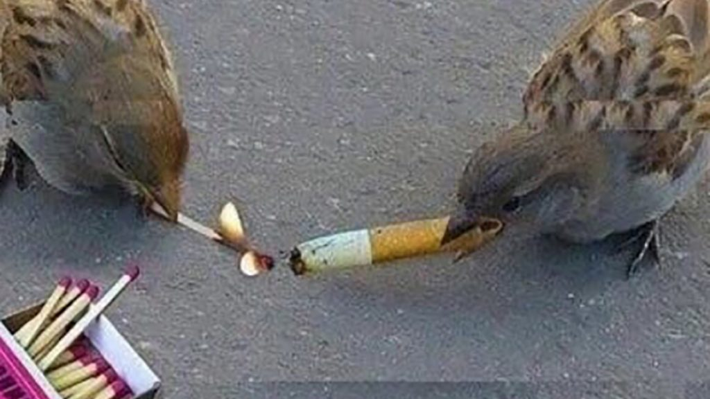 Two birds forced to work together due to extreme government cutbacks.