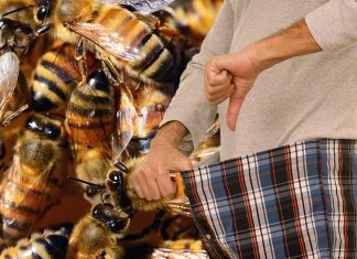 A Salem, Oregon man believes he can treat erectile dysfunction with bee stings.