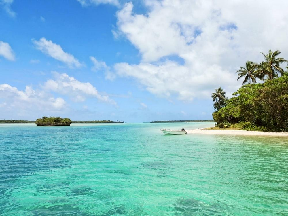 white boat on body of water near green palm trees